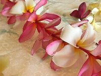 How to pick quality plumeria flowers for a lei