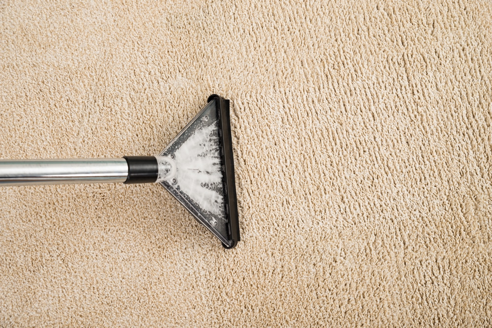 How to prevent mildew on wet carpet