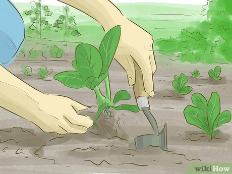 How to make money growing vegetables